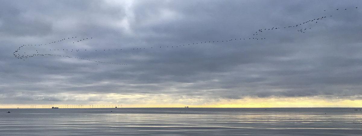 Armarmino Birds - Photo: Bo Normander