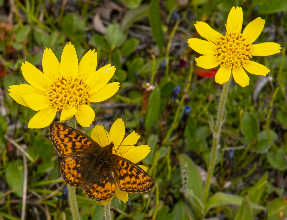 Flower and butterfly - Photo: Bo Normander